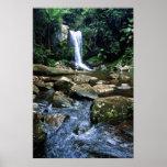 Australian Rainforest Poster