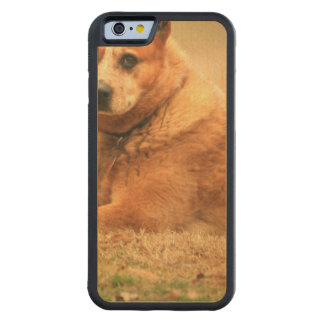 Australian Red Cattle Dog Carved Maple iPhone 6 Bumper Case