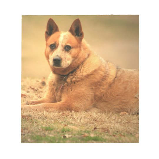 Australian Red Cattle Dog Notepad