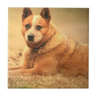 Australian Red Cattle Dog Tiles