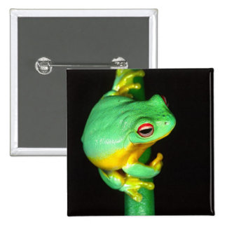 Australian Red Eye Treefrog, Litoria chloris, 2 Inch Square Button