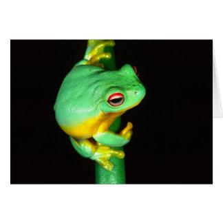 Australian Red Eye Treefrog, Litoria chloris, Greeting Cards