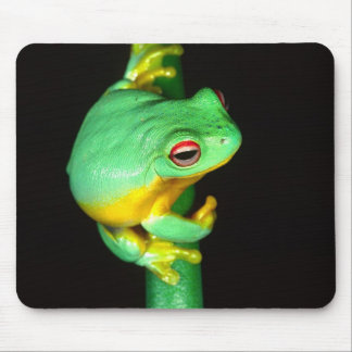 Australian Red Eye Treefrog, Litoria chloris, Mouse Pad