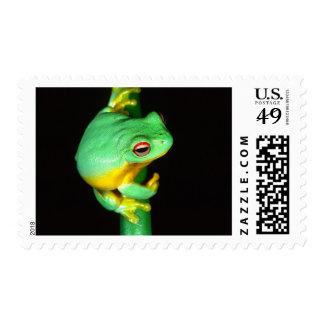 Australian Red Eye Treefrog, Litoria chloris, Postage Stamp