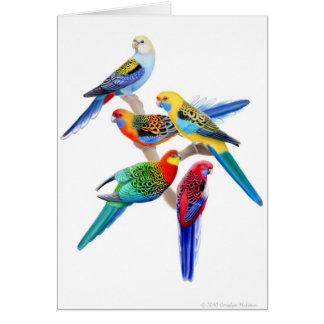 Australian Rosella Parrots Card