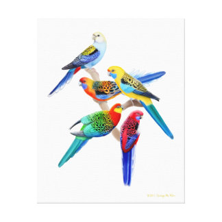 Australian Rosella Parrots Wrapped Canvas