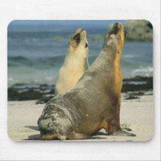Australian Sea Lions, Neophoca cinerea), 2 Mouse Pad