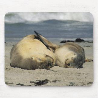 Australian Sea Lions, Neophoca cinerea), Mouse Pad