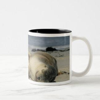 Australian Sea Lions, Neophoca cinerea), Two-Tone Coffee Mug
