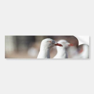 Australian seagulls at Sydney Harbour Bumper Sticker