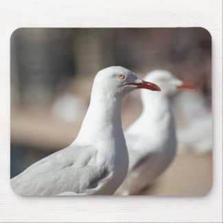 Australian seagulls at Sydney Harbour Mouse Pad