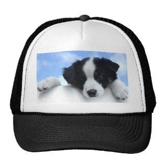 Australian Sheepdog Puppy Trucker Hat