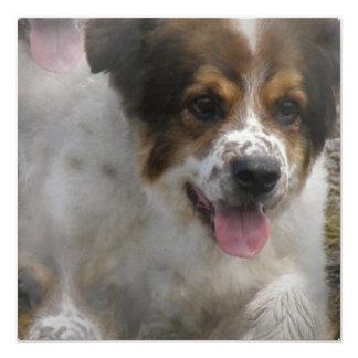"""Australian Sheherd Puppy Invitation 5.25"""" Square Invitation Card"""