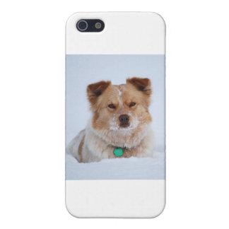 Australian Shepard/Heeler Dog in Snow Cover For iPhone SE/5/5s