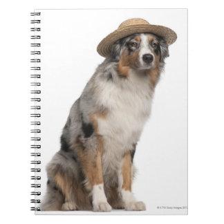 Australian Shepherd (10 months old) wearing a Notebook