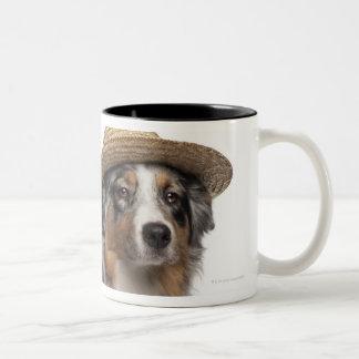 Australian Shepherd (10 months old) wearing a Two-Tone Coffee Mug
