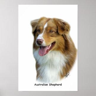 Australian Shepherd 9K4D-16 Poster