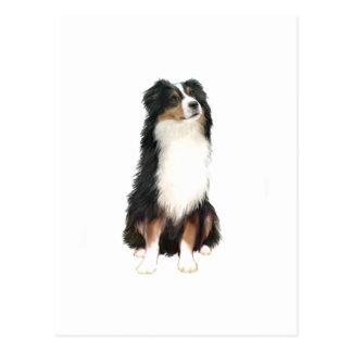 Australian Shepherd (A) - Tri Color Postcards