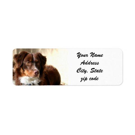Australian Shepherd Address Labels