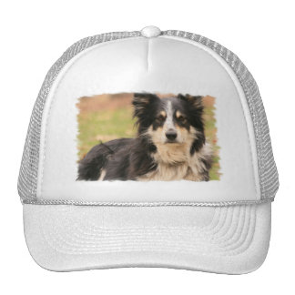 Australian Shepherd Baseball Hat