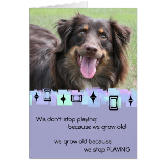 Australian Shepherd Birthday Greetings Cards