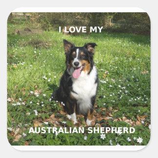 australian-shepherd-black tri love w pic square sticker