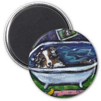 Australian Shepherd blue merle takes bath Magnet