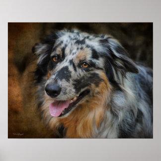 Australian Shepherd Classic Photo Fine Art Print