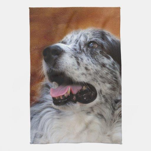Australian Shepherd Classic Photo Kitchen Towel