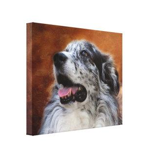 Australian Shepherd Classic Portrait Canvas Print