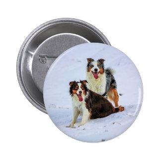Australian shepherd couple dogs button