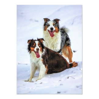 Australian shepherd couple dogs card