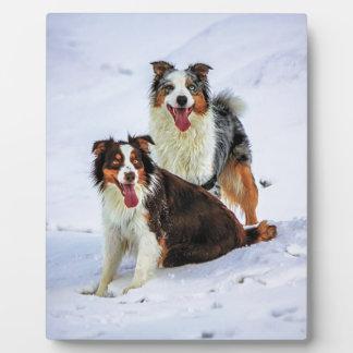 Australian shepherd couple dogs plaque