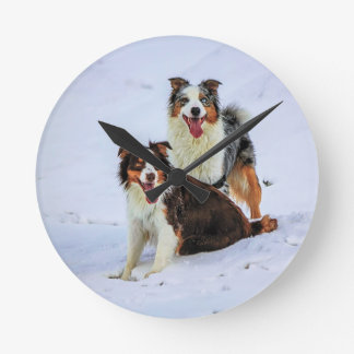 Australian shepherd couple dogs round clock