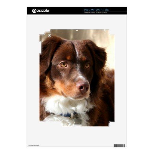 Australian Shepherd Decals For The iPad 2