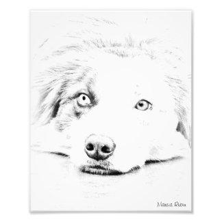 Australian Shepherd dog art Photo Art
