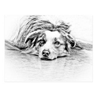 Australian Shepherd dog art Postcard