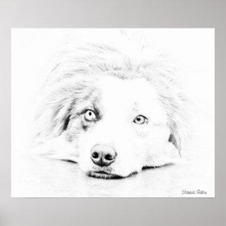 Australian Shepherd dog art Poster