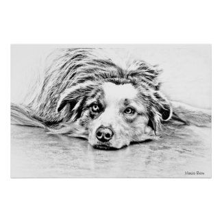 Australian Shepherd dog art Poster