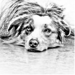 """Australian Shepherd dog art Statuette<br><div class=""""desc"""">AUSTRALIAN SHEPHERD - GIFTS,  APPAREL,  AND ACCESSORIES FOR THOSE OF YOU WHO LOVE THE BEAUTIFUL AND SUPER INTELLIGENT AUSTRALIAN SHEPHERD.</div>"""