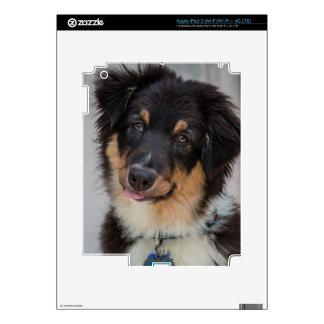 Australian Shepherd Dog Decal For iPad 3
