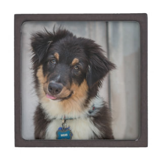 Australian Shepherd Dog Gift Box