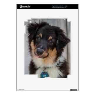 Australian Shepherd Dog iPad 2 Decals