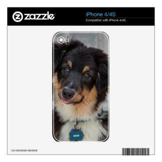 Australian Shepherd Dog iPhone 4 Skins