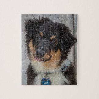 Australian Shepherd Dog Jigsaw Puzzle
