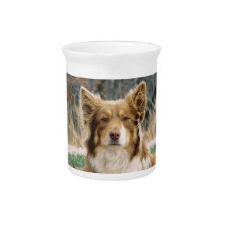 Australian Shepherd Dog Pitcher
