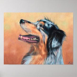 Australian Shepherd Dog Poster