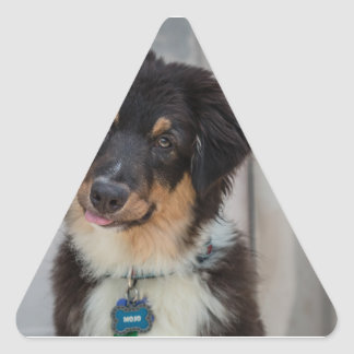 Australian Shepherd Dog Triangle Sticker