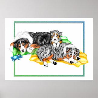 Australian Shepherd Family Nap Poster