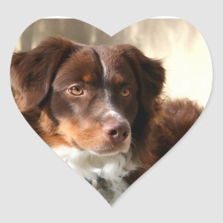 Australian Shepherd Heart Stickers